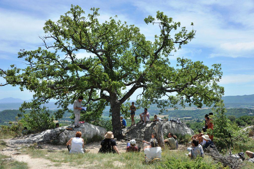 arbre dans les mourres forcalquier